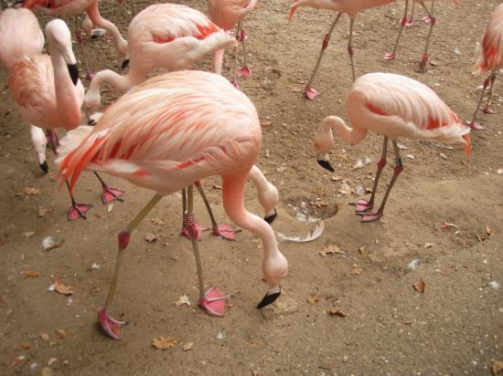 Animaux du zoo de la Palmyre